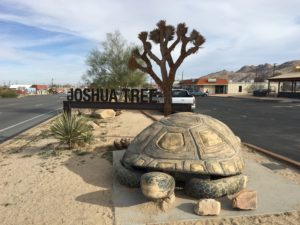 Joshua Tree Sign With Tortoise